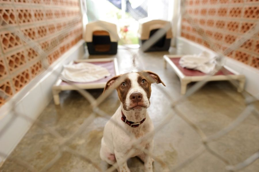 Dog Rescue Shelters