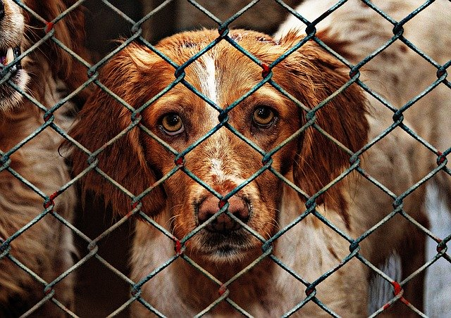 Adopt A Dog For Free