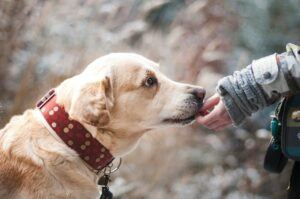 How-To-Talk-Dog