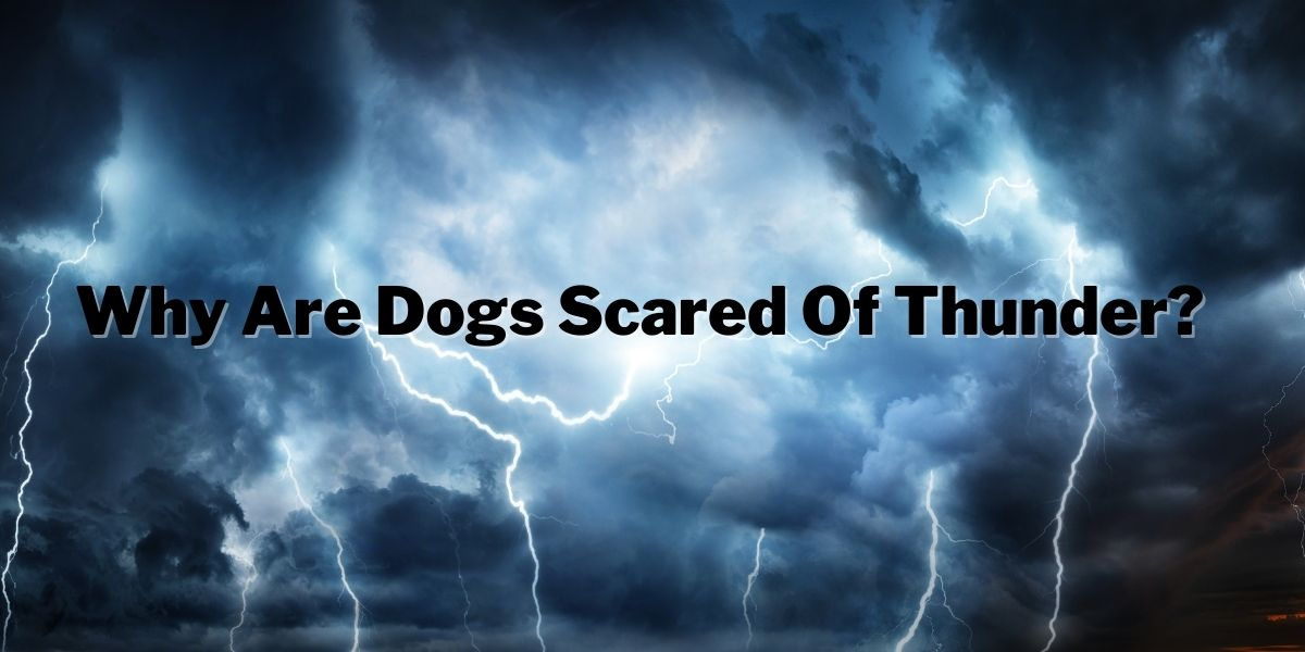 Why Are Dogs Scared Of Thunder
