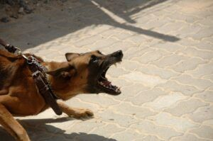 How to Stop an Aggressive Dog