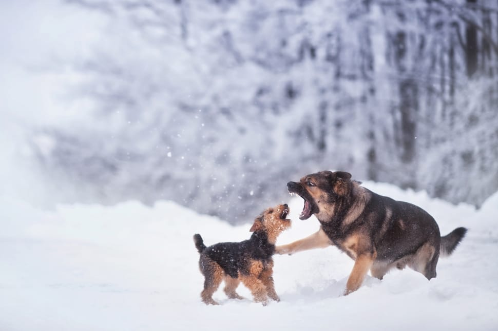 Stop Your Dogs Fighting