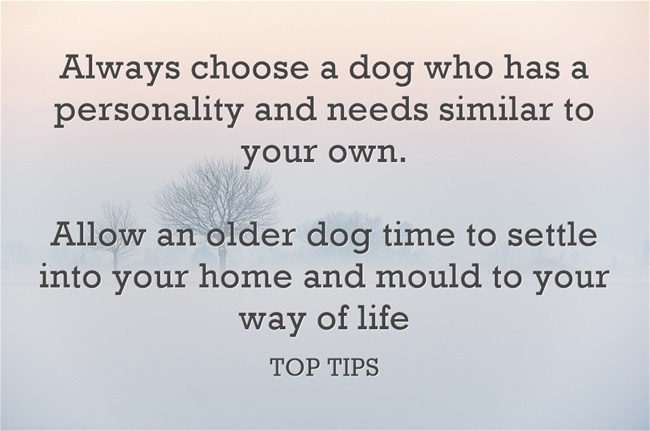 Do Dogs Help Loneliness