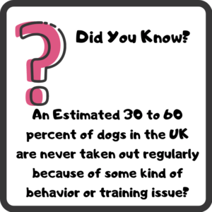 Correcting Dog Behavior Problems