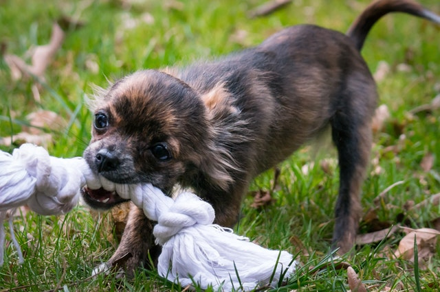 Puppy Chewing Solutions