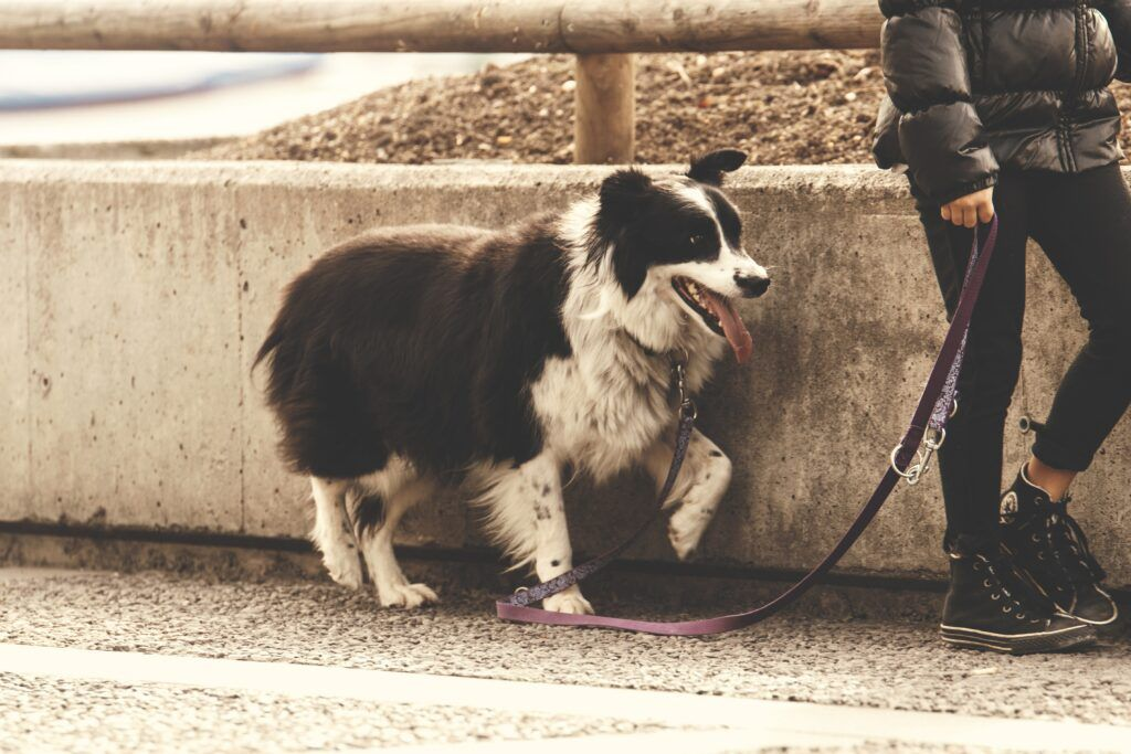 What Makes A Good Dog Walker