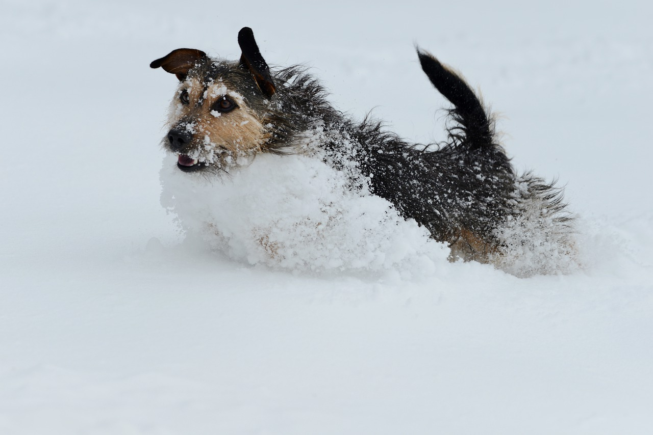 Protect Your Dogs Paws in the Winter