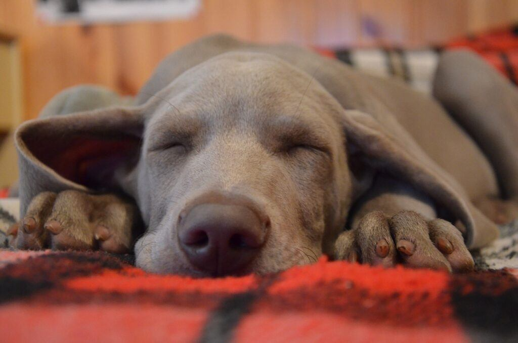 Does Let Sleeping Dogs Lie Mean