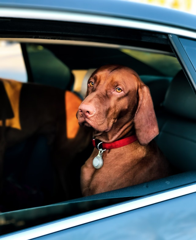 How to Travel with a Dog in a Car