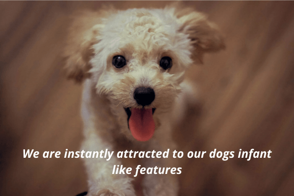 Why Dogs Do Things They Do