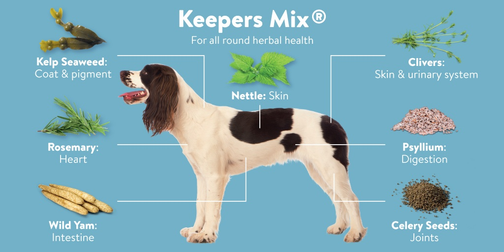 Herbal Health Supplements for Your Dog