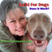 Reiki for Dogs-Does It Work?