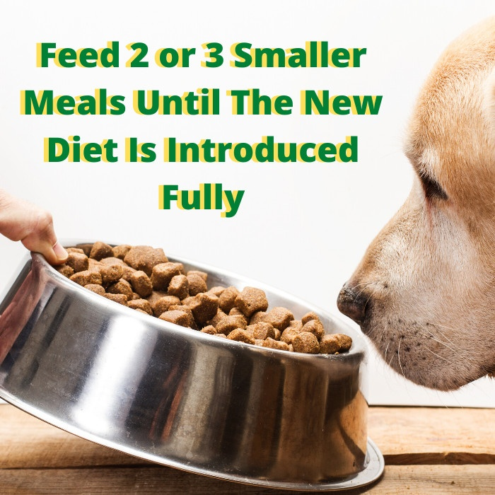 canine kidney disease diet