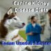 Canine Kidney Disease Diet-Things You Need To Know
