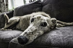 Dealing With Canine Dementia