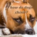 How Do Dogs Think?