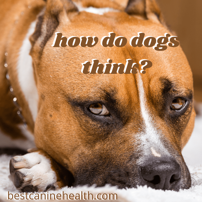 How Do Dogs Think