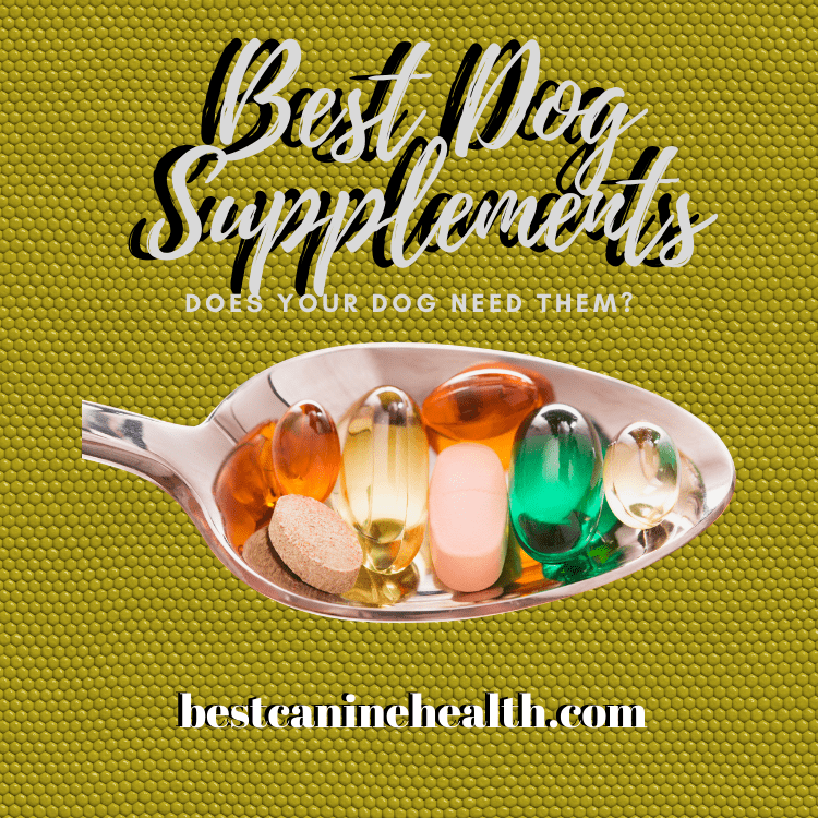 Best Dog Supplements