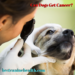 Can Dogs Get Cancer?