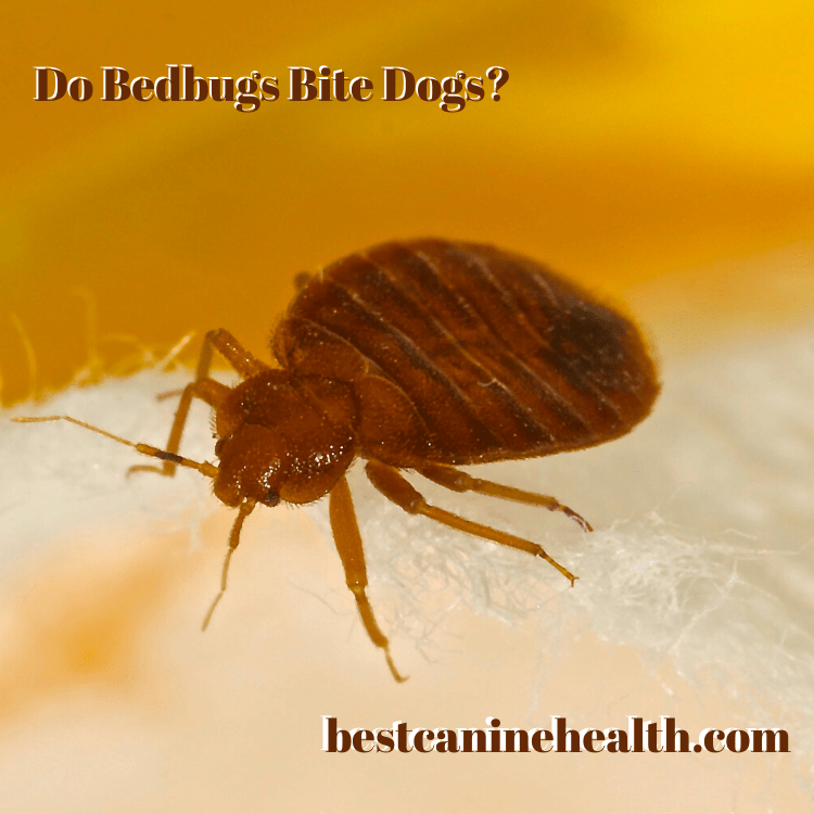Do Bedbugs Bite Dogs