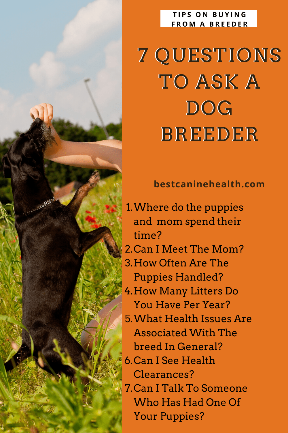 Buying from a breeder