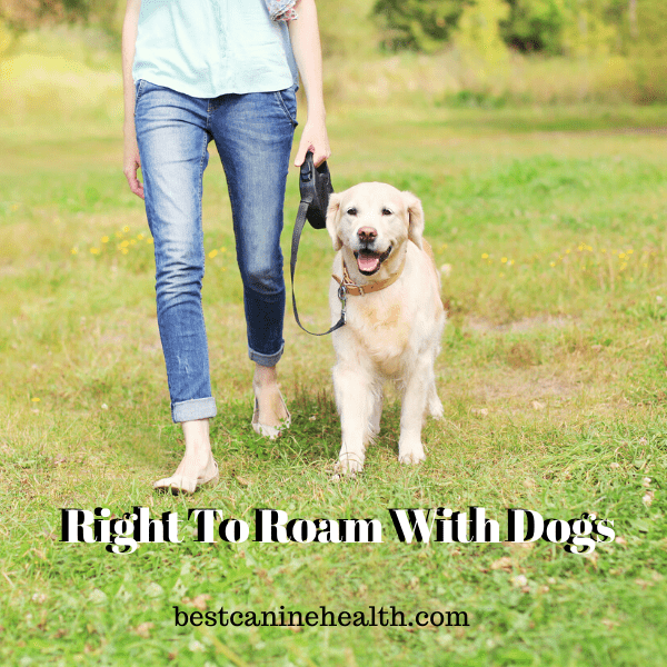 Right To Roam With Dogs