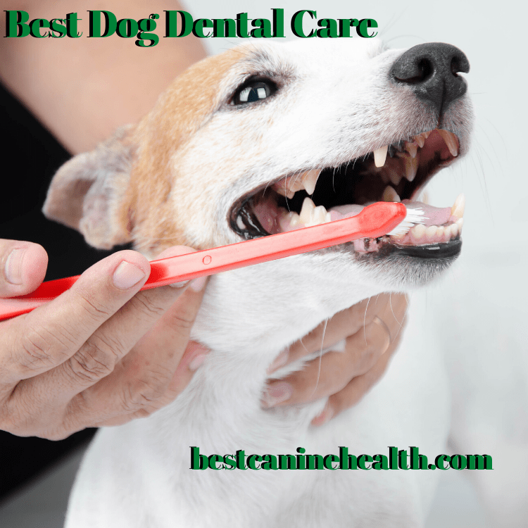 best dog dental care