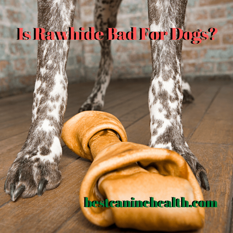 Is Rawhide Bad For Dogs