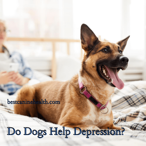 Do-Dogs-Help-Depression