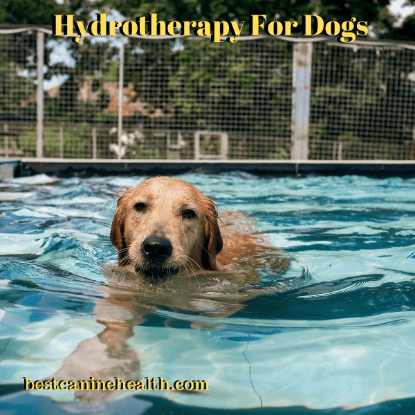 Hydrotherapy Fоr Dogs