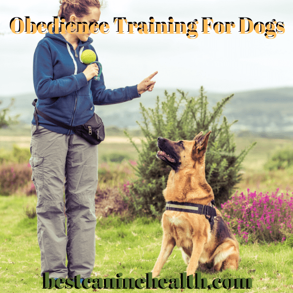 Obedience Training For Dоgѕ