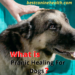 Pranic Healing For Dogs
