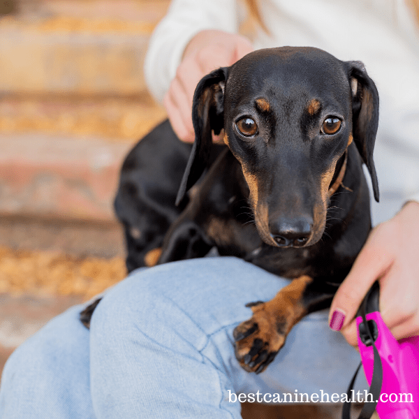 What-Is-Luxating-Patella-In-Dogs