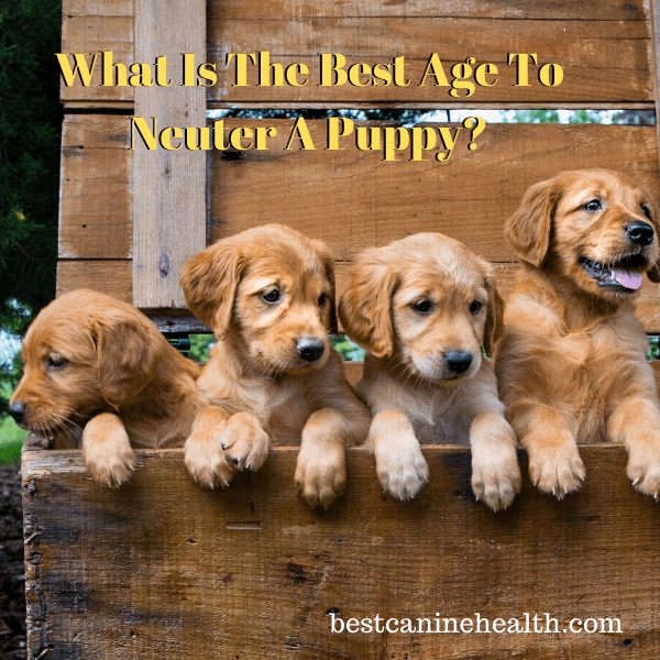 what age can dogs be neutered