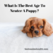 What Is The Best Age To Neuter A Puppy