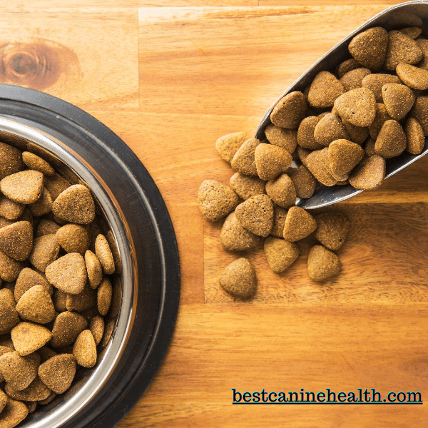 What Should I Look For In Dog Food