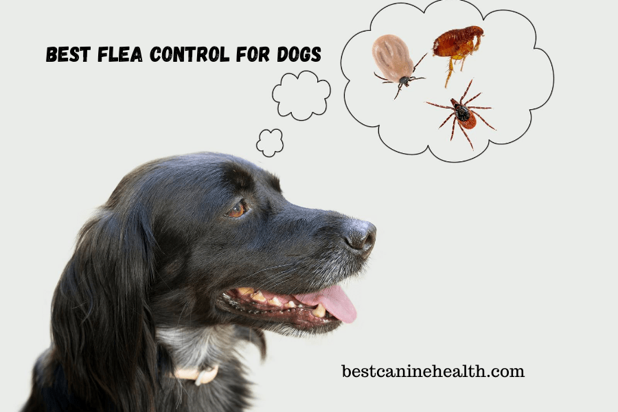 Best Flea Control For Dogs