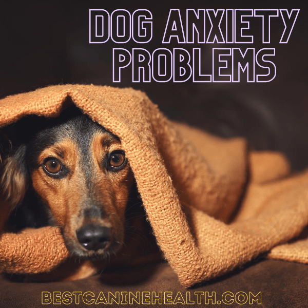 Dog Anxiety Problems