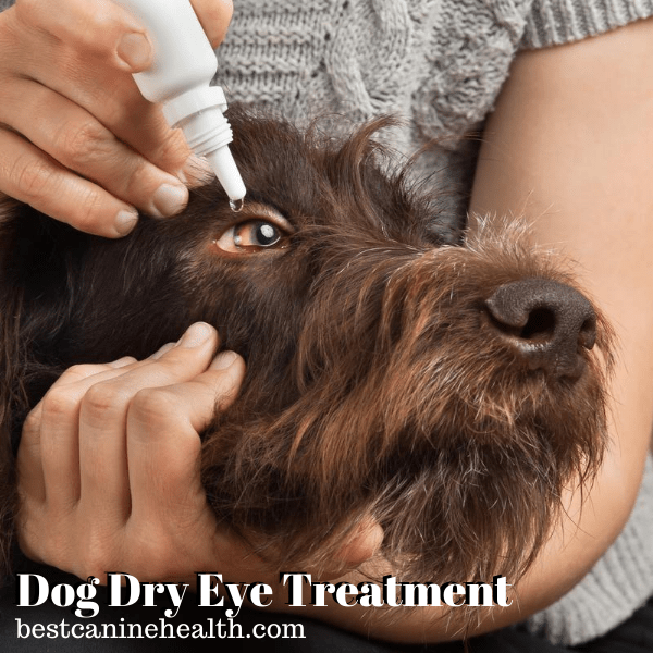 Dog Dry Eye Treatment