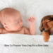Dogs With Babies-Important Things To Remember