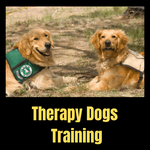 Therapy Dogs Training