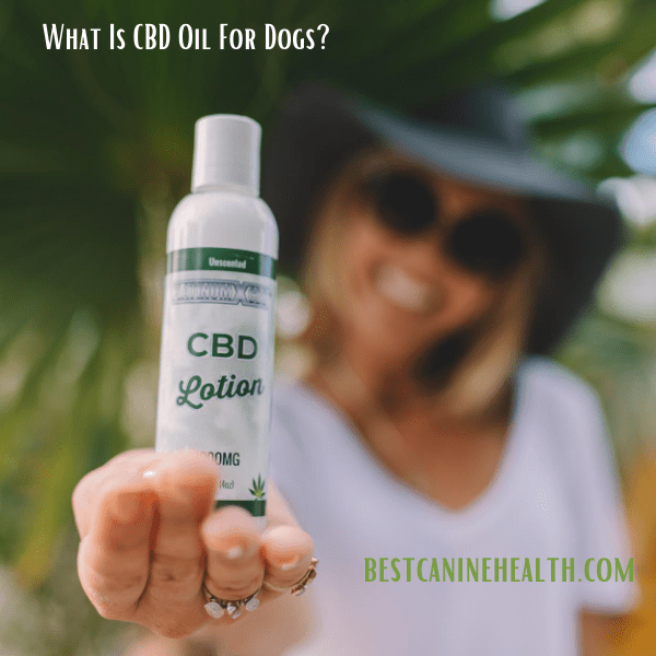 What Is CBD Oil For Dogs?