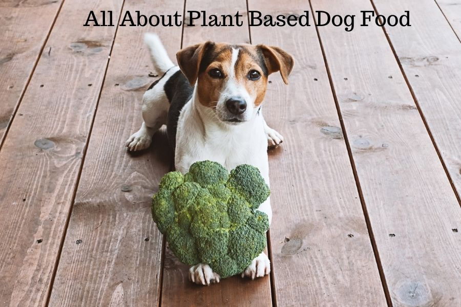 All About Plant Based Dog Food