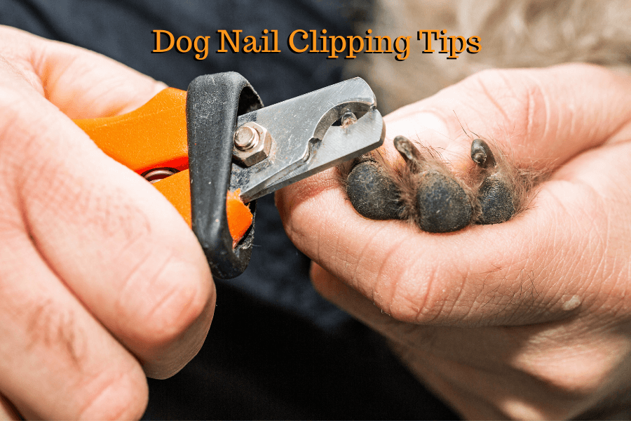 Dog Nail Clipping Tips