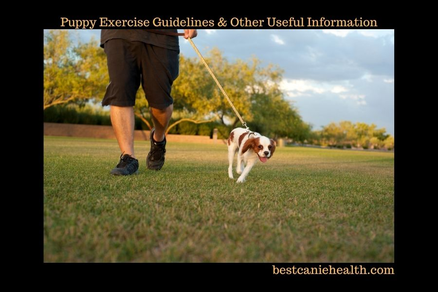 Puppy Exercise Guidelines & Other Useful Stuff!