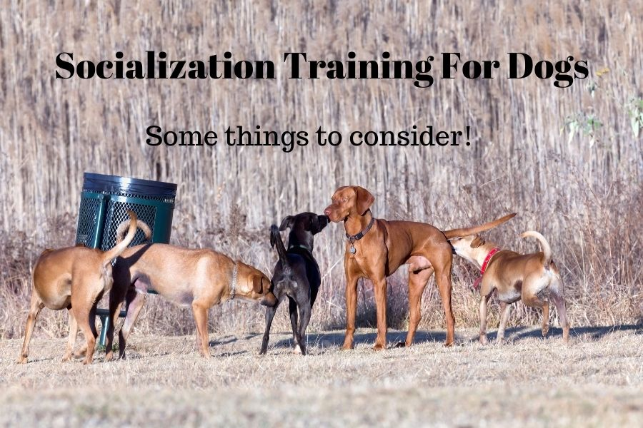 Socialization Training For Dogs