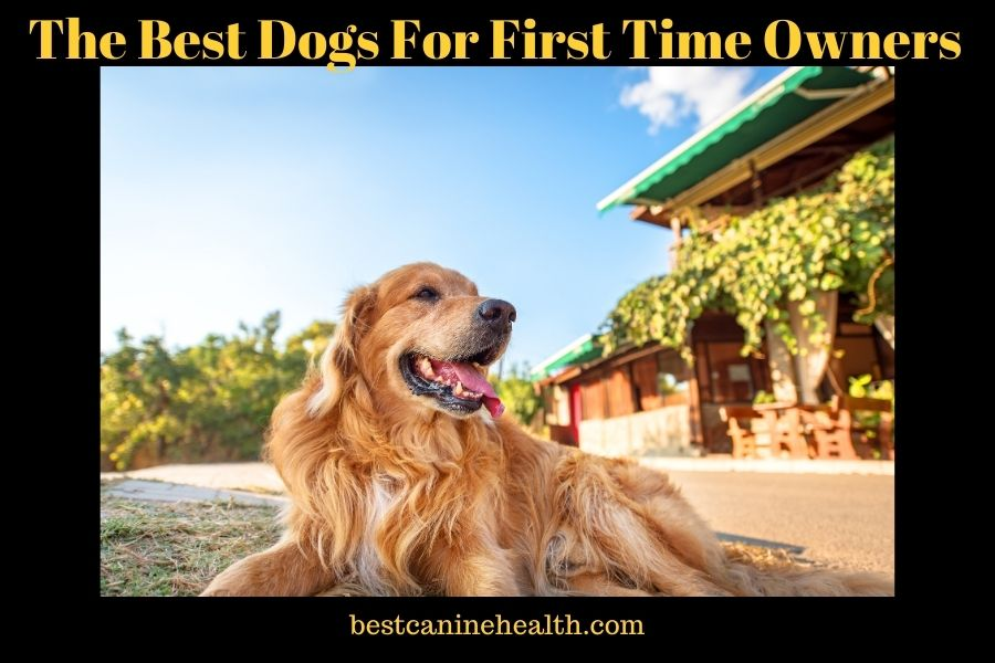 The Best Dоgѕ Fоr First Tіmе Ownеrѕ