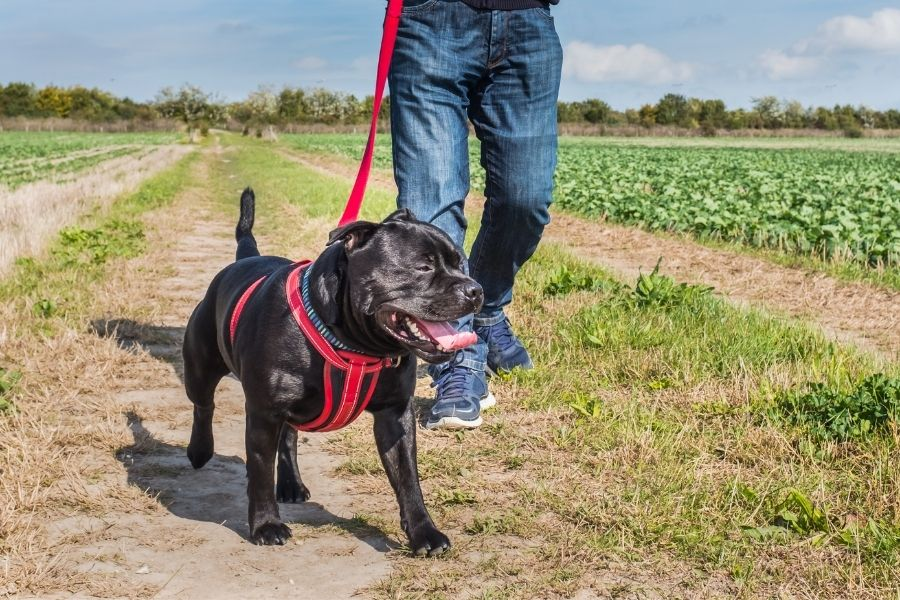 The Best Dog Harness To Prevent Pulling