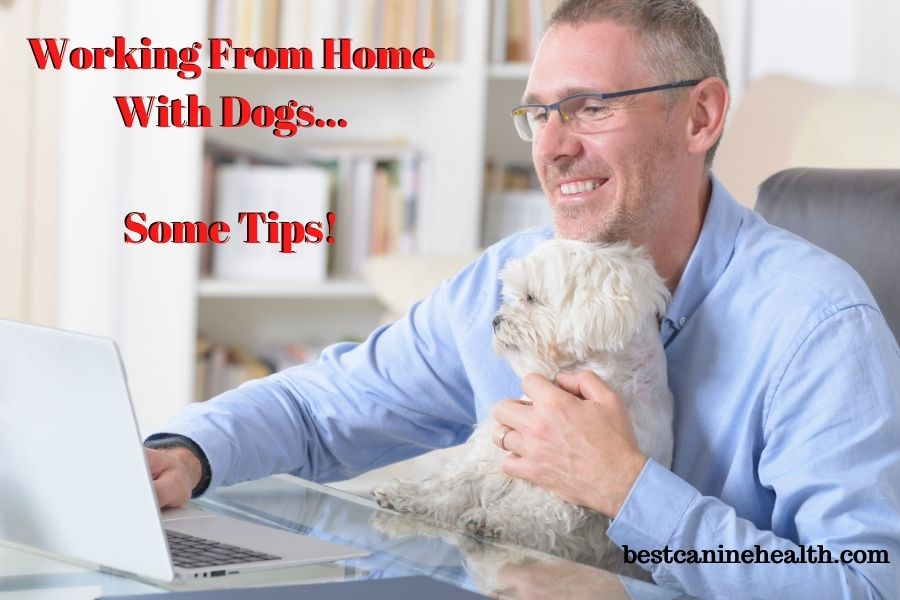 Workіng-From-Home-With-Dogs