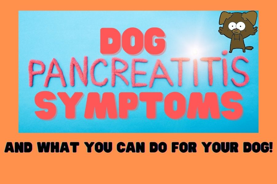 Dog Pancreatitis Symptoms